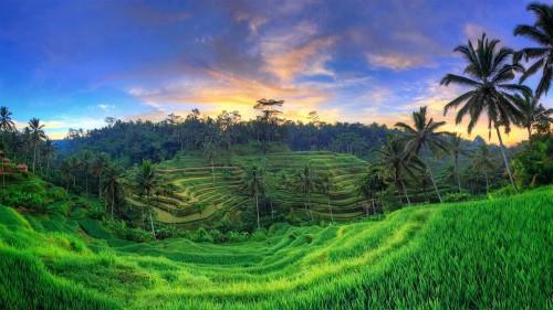 乌布德格拉朗梯田,印度尼西亚巴厘岛 (© Michele Falzone/Alamy)