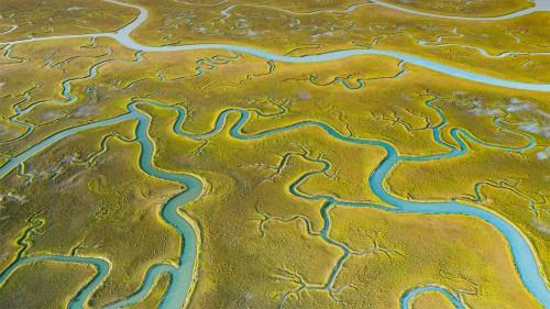 鸟瞰Mockhorn岛野生动植物管理区沼泽地内的潮汐通道,弗吉尼亚 (© Shane Gross/Minden Pictures)